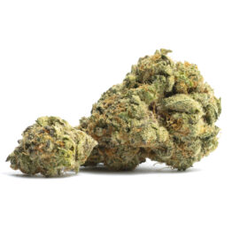 Buy orange cookies weed strain, alien orange cookies strain, orange cookies strain seeds, in all cities in USA, UK, Canada, Australia.